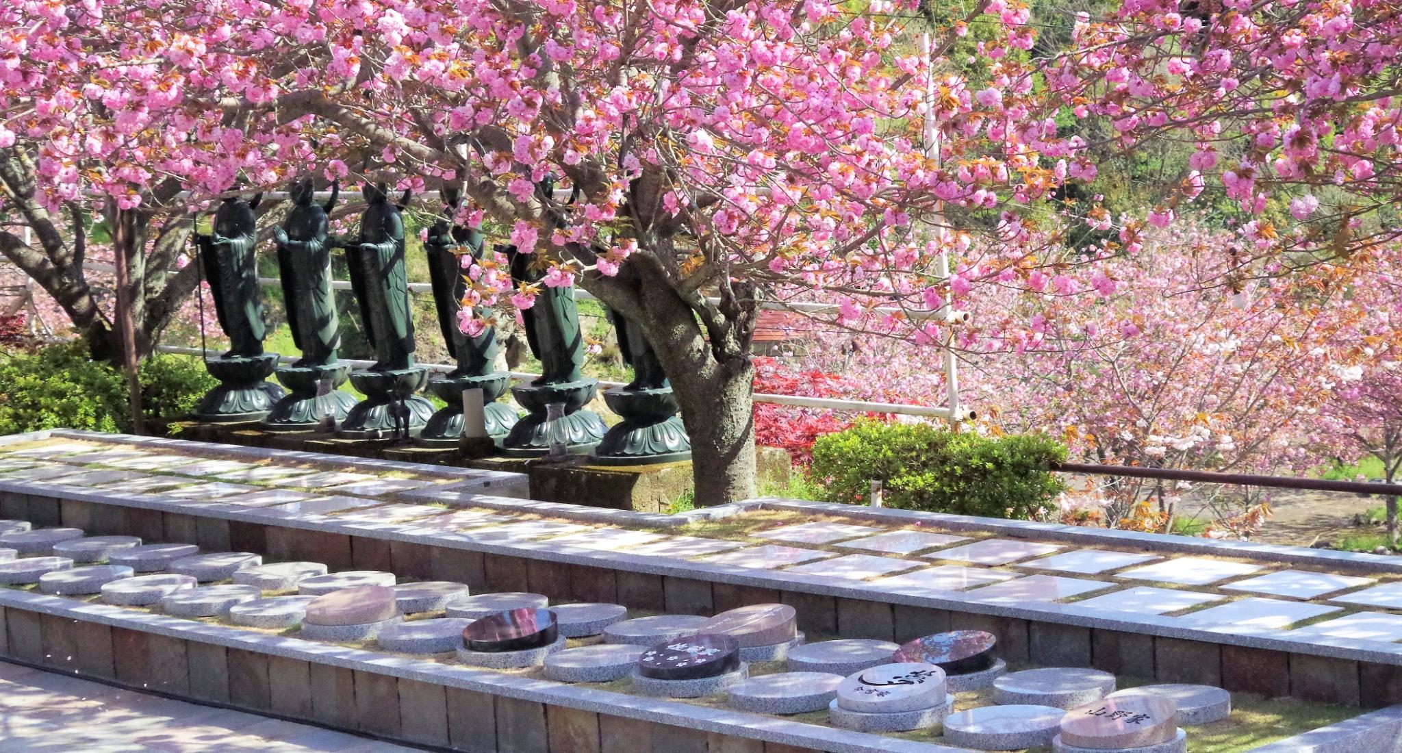絶景お寺で、美しい八重桜に見守られて眠る<br>大分一心寺の樹木葬「夢さくら」<br>4名様まで収容可能、今なら45万円でご利用いただけます。
