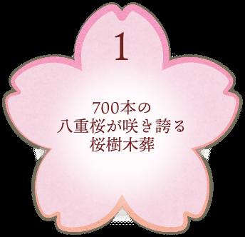 700本の八重桜が咲き誇る桜樹木葬