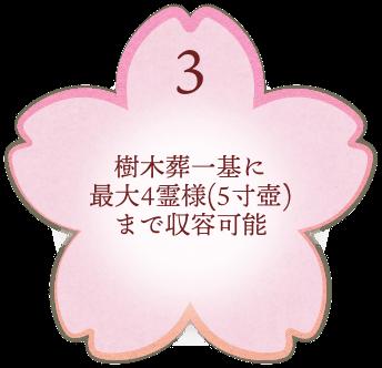 樹木葬一基に最大4霊様(5寸壺)まで収容可能