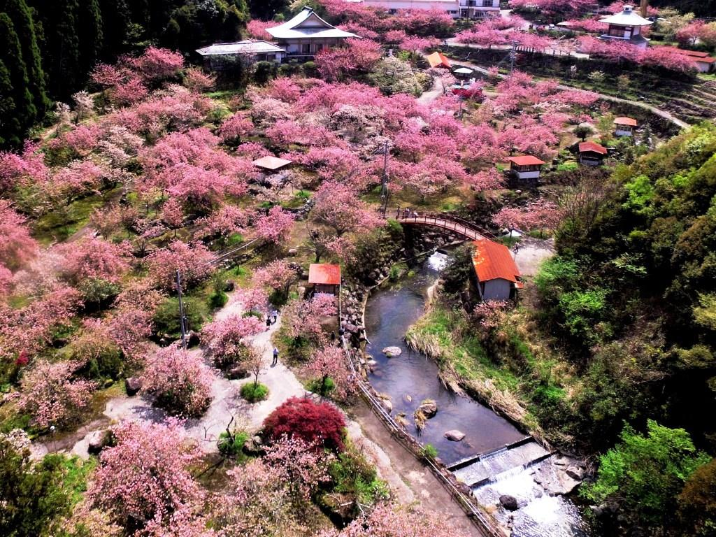 桜祭り期間中の一心寺