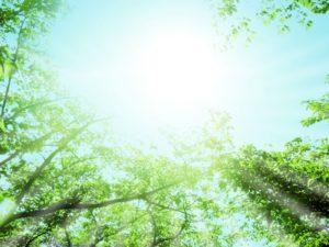 木漏れ日に光る木々