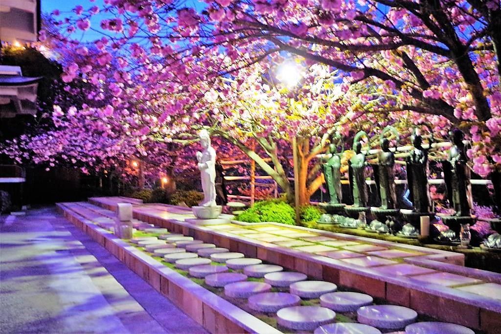 樹木葬墓地 夢さくらもライトアップされます。とても幻想的ですよ!
